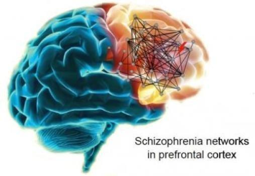 Schizophrenia May Start In Womb >> Gluten And Schizophrenia Does It All Start In The Womb Rosemary