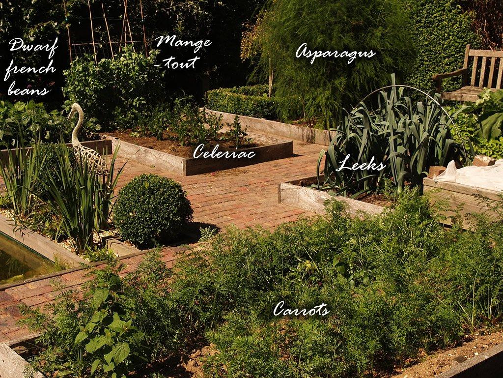 vegetable_garden_Aug_2013