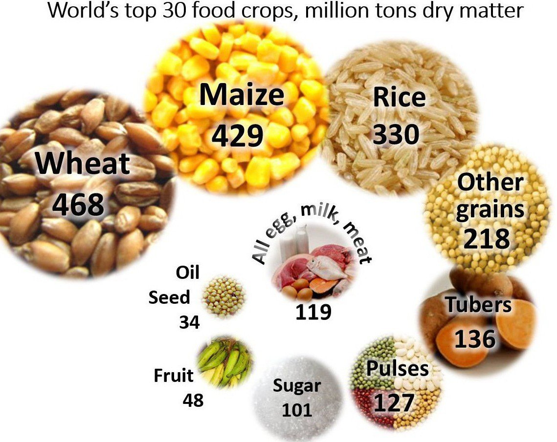 World's 30 top food crops