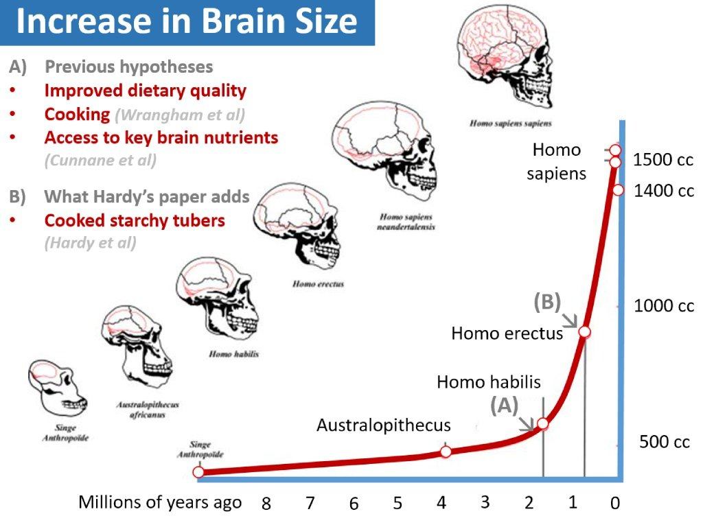 Brain_size_evolution