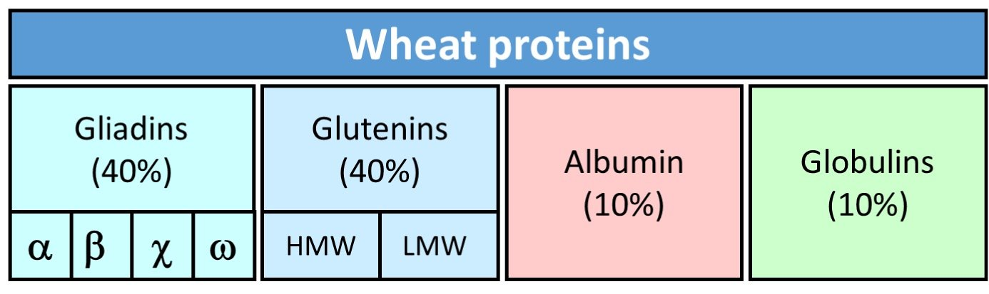 Wheat_proteins