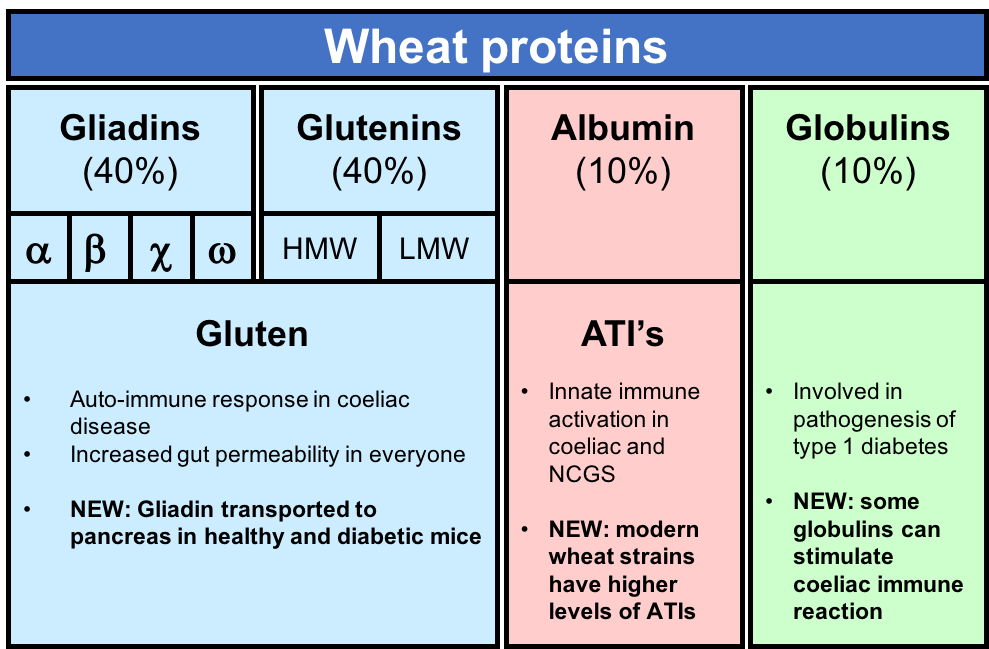 Fig 1. The storage proteins found in grains include prolamins (blue), albumins (red) and globulins (green). Classic gluten containing grains such as wheat, rye and barley have high percentages of the prolamins (gluten) which cause coeliac disease. Recent work has identified toxic effects from the other fractions, including amylase trypsin inhibitors (ATIs) in the albumin fraction and immune reactive components in the globulins which have been linked to the pathogenesis of type 1 diabetes. Newly discovered Coeliac-reactive epitopes among the globulins may be significant as some non-gluten grains contain high percentages of globulins and may contribute to ongoing damage even under a gluten-free diet