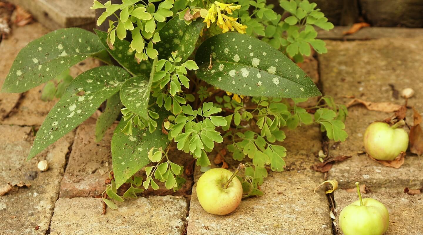 Herbs and fruit